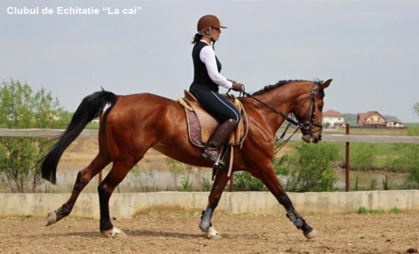 varicoză și călărie)